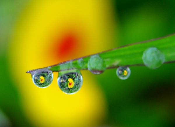 Flowers in Droplets 01.jpg