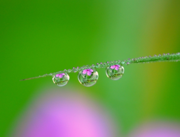 Flowers in Droplets 02.jpg