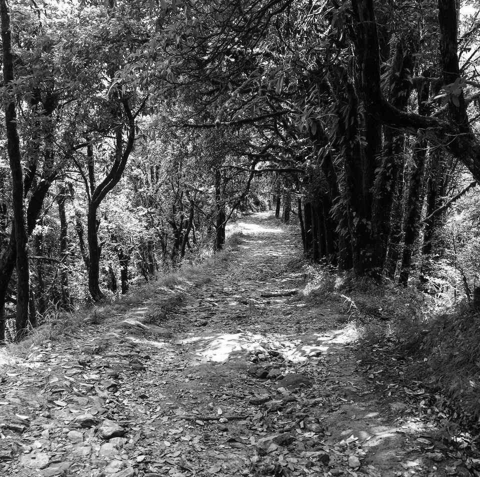 Jungle_path_bw.jpeg