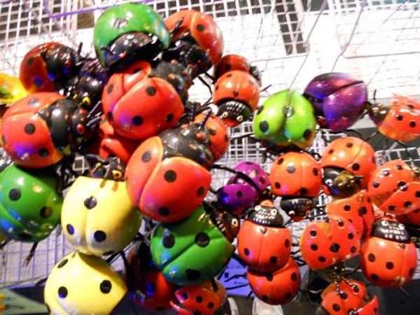 ladybugs.jpg