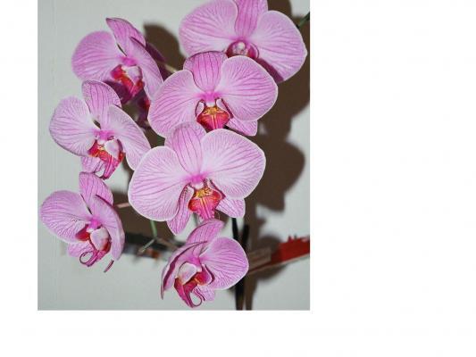 Orchids4-1.JPG