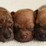 puppies_0.png
