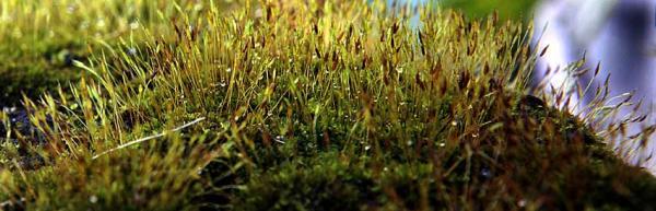 Moss02.jpg