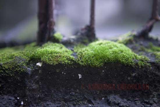 Moss05.jpg
