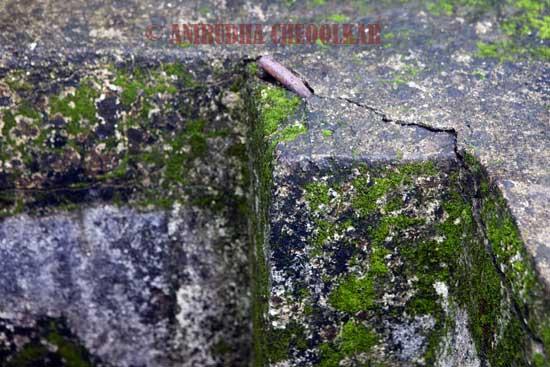 Moss06.jpg