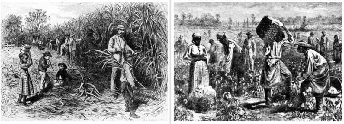 plantation-collage