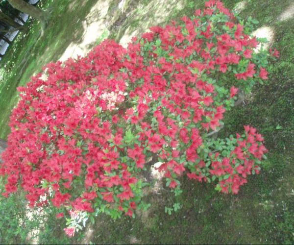 Green-Red.jpg